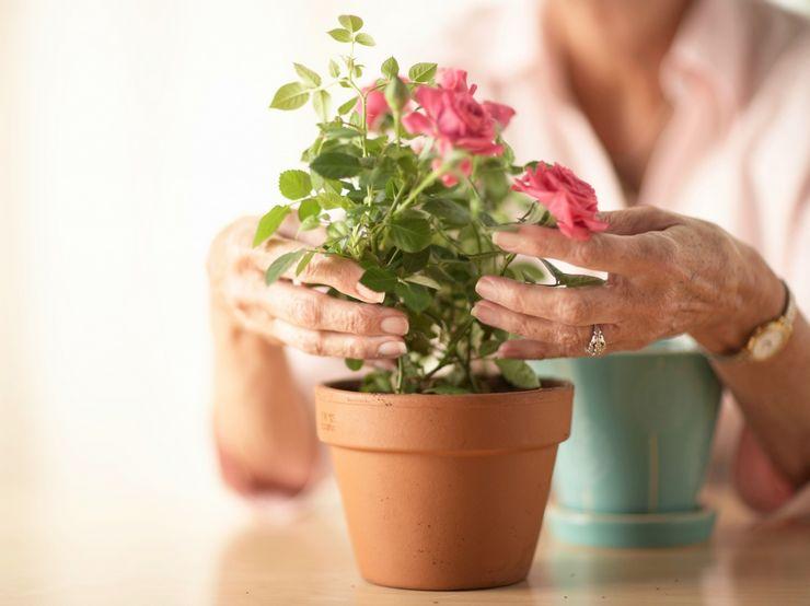 Домашний осмотр купленного растения