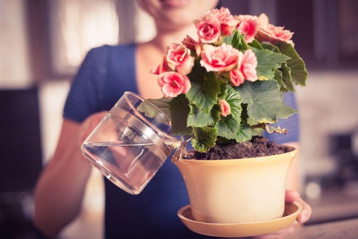 Полив цветка после покупки
