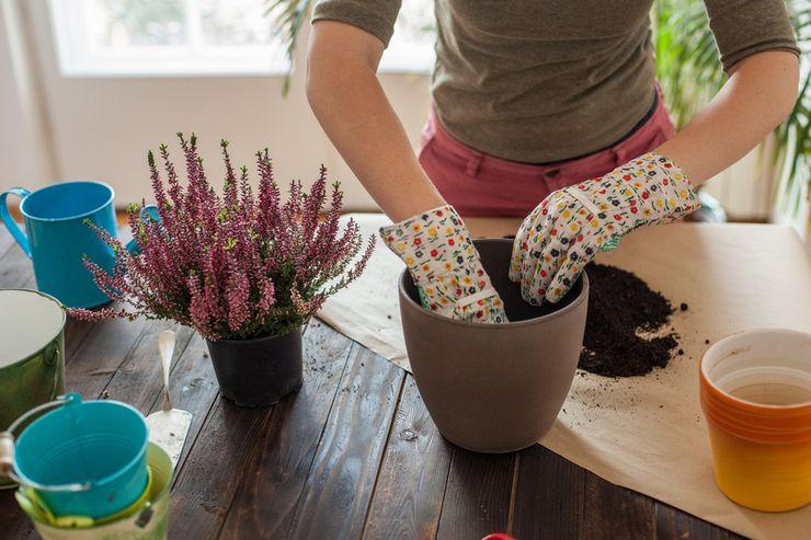 Пересадка растения после покупки