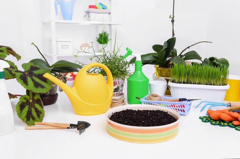 Уход за растением после покупки