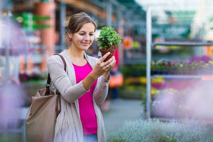 Как правильно выбрать цветок в магазине