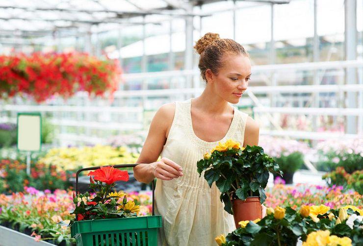 Что делать с цветами после покупки