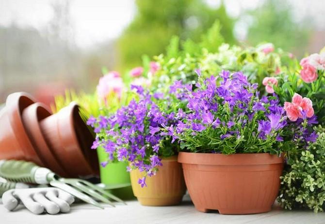 Что делать сразу после покупки растения