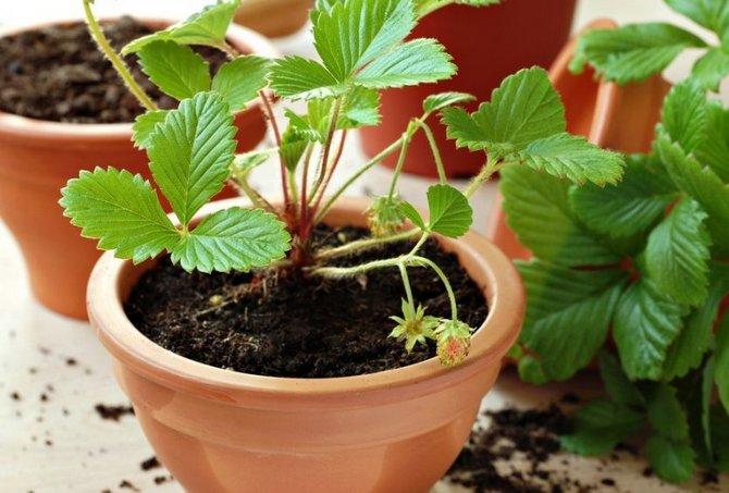 Советы и рекомендации новичкам по уходу за цветком или растением после покупки в магазине