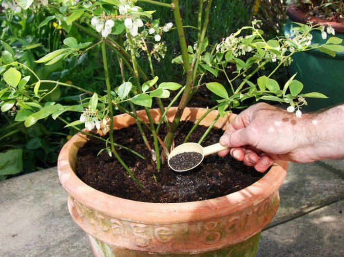 Комплексное удобрение в саду и цветнике