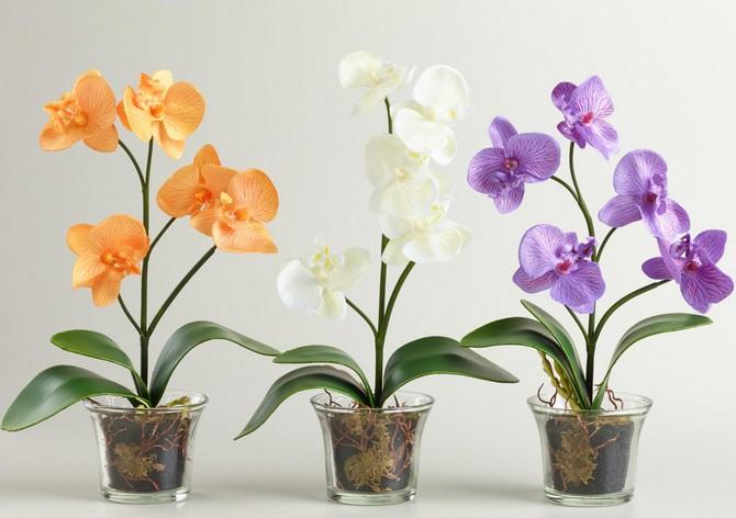 Как правильно ухаживать за орхидеями дома в зимний период