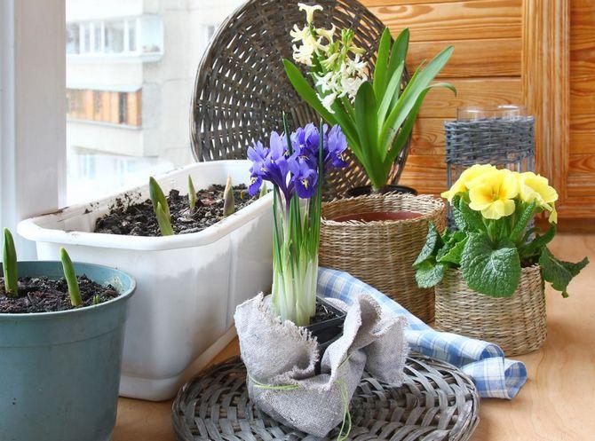 Как безопасно в мороз и холод привезти цветы домой