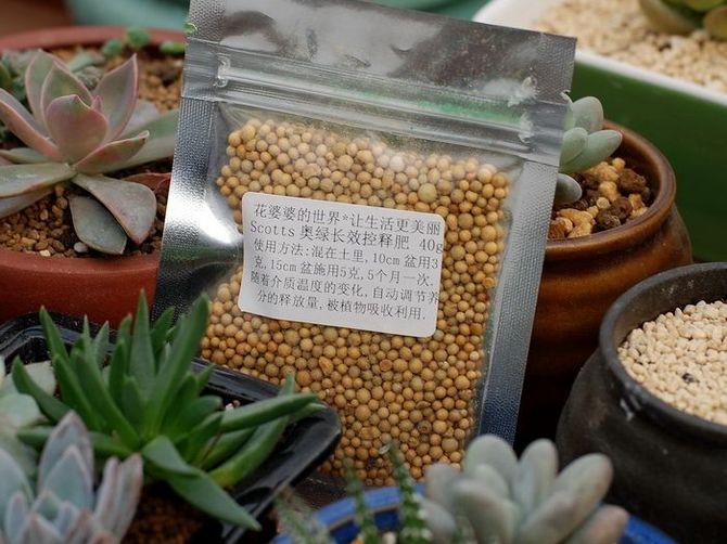 Как правильно выбрать и использовать удобрения для цветов и растений
