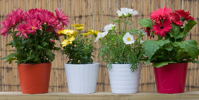 В зимний период, растения нужно расставлять в тех местах, где до них дотянется солнечный свет