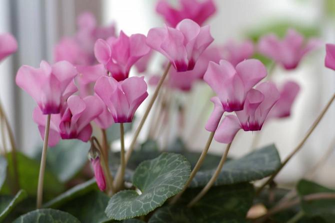 При какой температуре лучше всего содержать растения и цветы летом и зимой