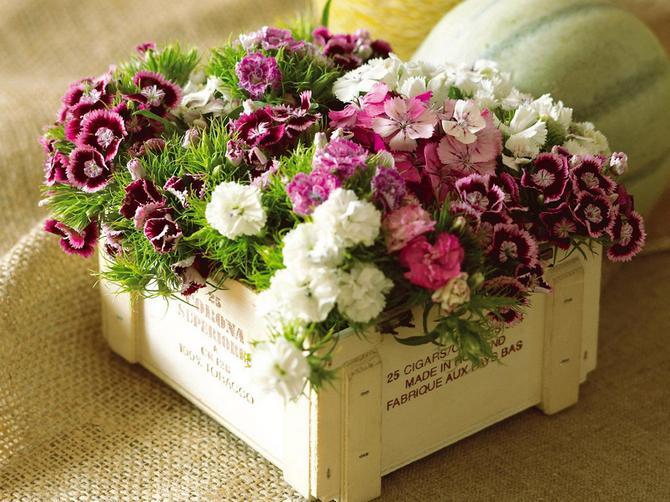 Уход и размножение за цветком