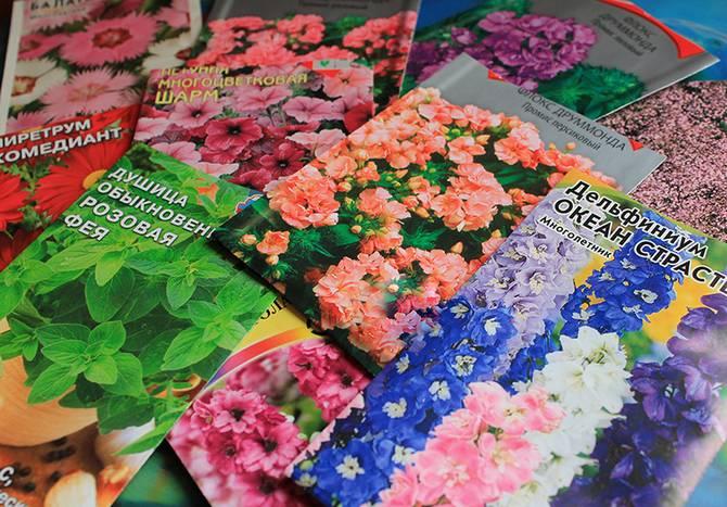Покупка семян цветов. Советы начинающему цветоводу