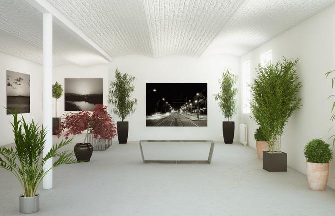 Как подбирать офисные растения