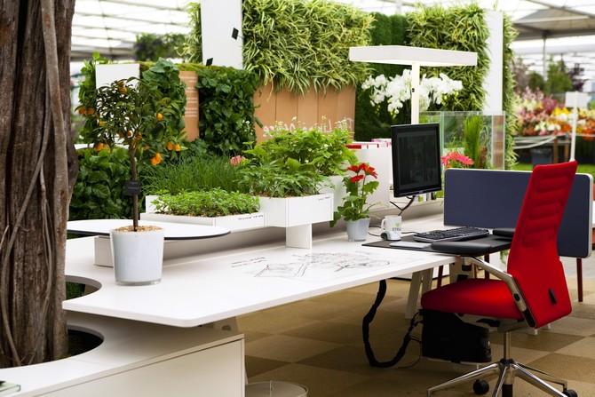 Комнатные растения для офиса