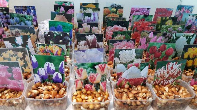 Выращиваем в саду и огороде семена покупные