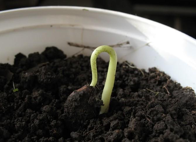 Главная задача четвертого периода – посадить косточку