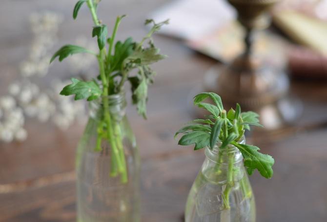 Как правильно высаживать, прищипывать и размножать цветы хризантемы