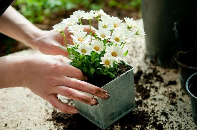 Советы и рекомендации новичкам как размножать растения