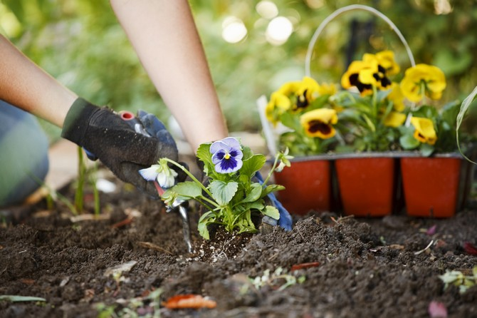 Размножение комнатных растений