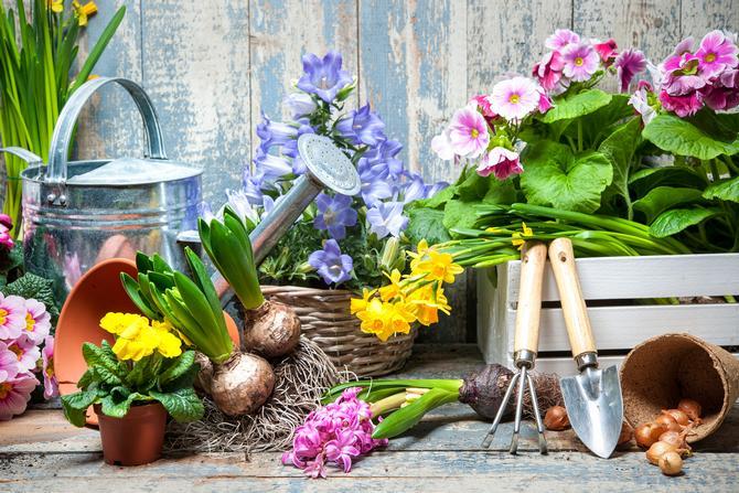 Особенности размножения комнатных растений