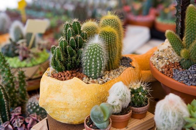 Кактусы и другие растения рода суккулентных в подобных условиях также чувствуют себя неуютно