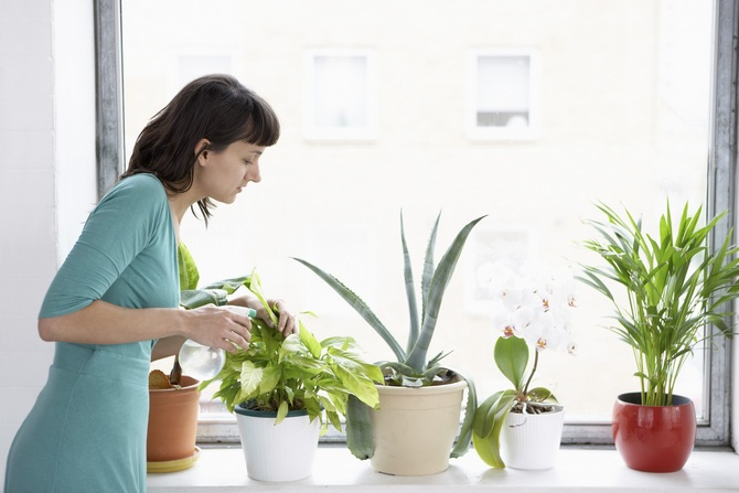 Как правильно ухаживать за растениями в жаркую погоду