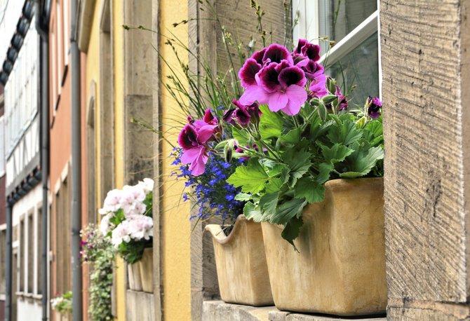 Комнатыне цветы и растения на открытом воздухе
