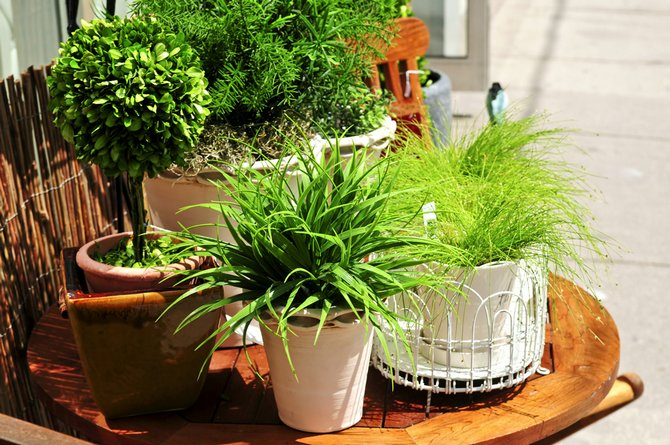 Как правильно вынести на весну и лето растения на улицу