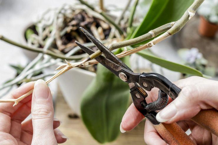 Как правильно обрезать комнатное растение