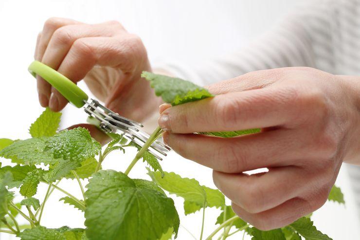 Виды и сроки обрезки растений