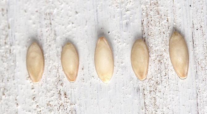 Подготовка семян к высадке на рассаду