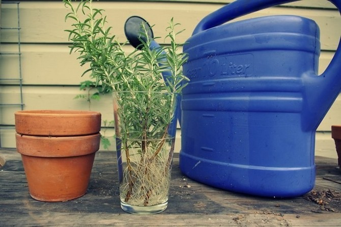 Стимуляторы роста растений. Гетероауксин. Циркон. Корневин. Эпин