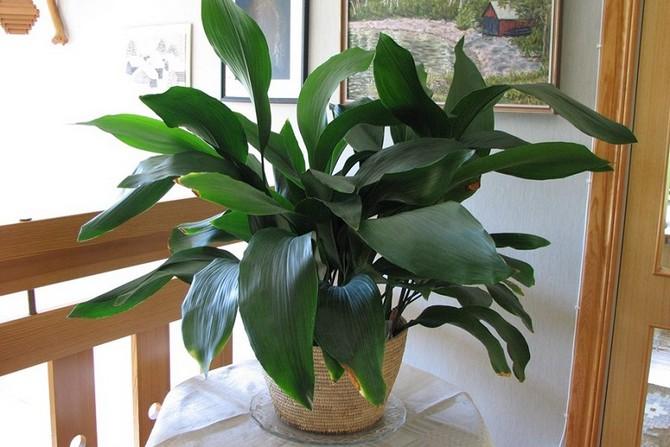 Советы и рекомендации по уходу за растением в домашних условиях