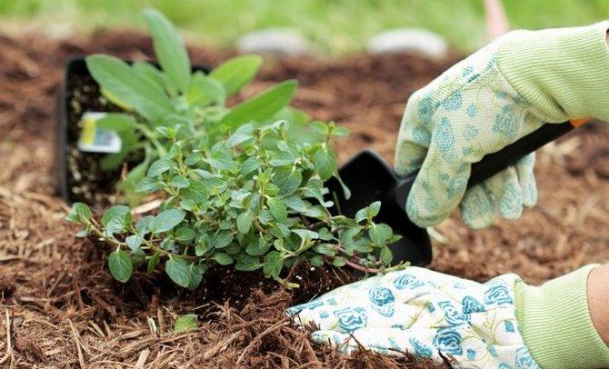 Правильное мульчирование: как и когда мульчировать почву