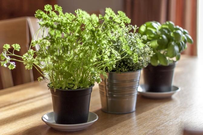 Какие растения подходят для комнатного выращивания