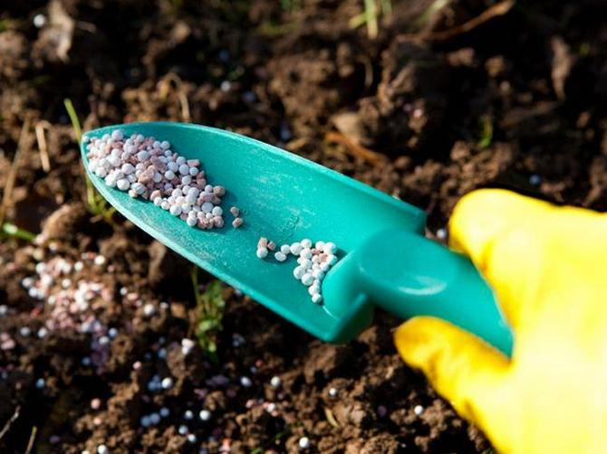 Все об удобрениях и подкормках для выращивания на огороде перцев и баклажанов