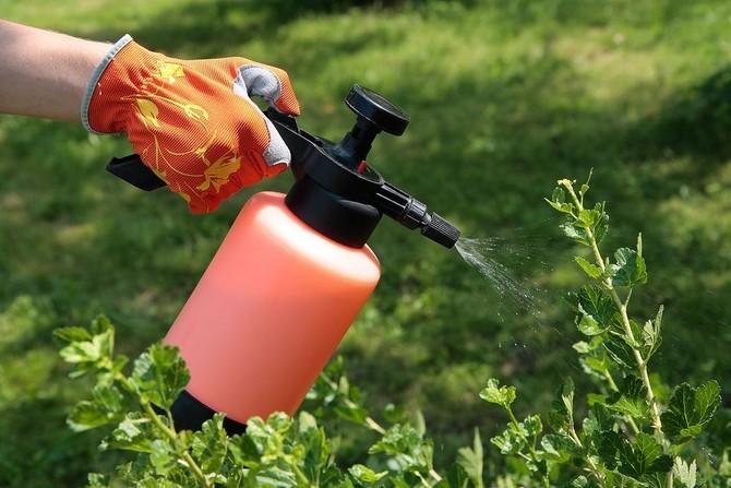 Удобрение смородины для увеличения урожая