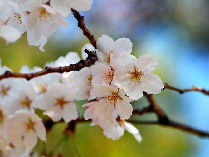 необходимо опрыскать цветущие деревья сладкой водой