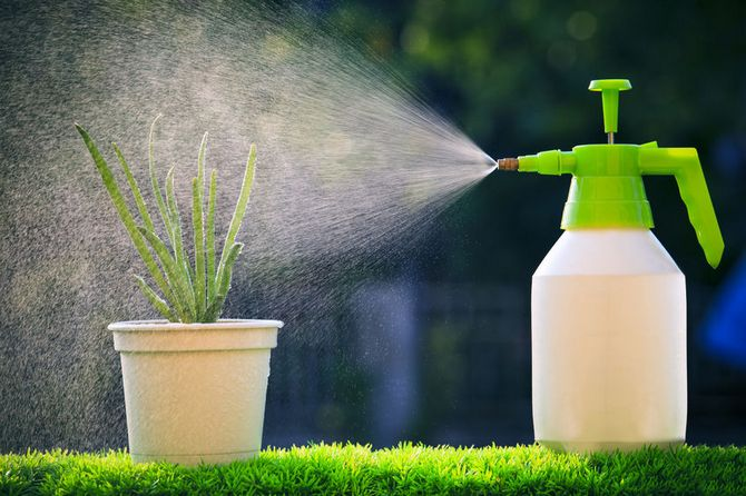 Влажность воздуха для растений. Опрыскивание растений