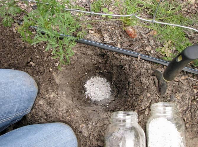 Можно добавлять золу непосредственно в грунт, закапывая его на небольшую глубину