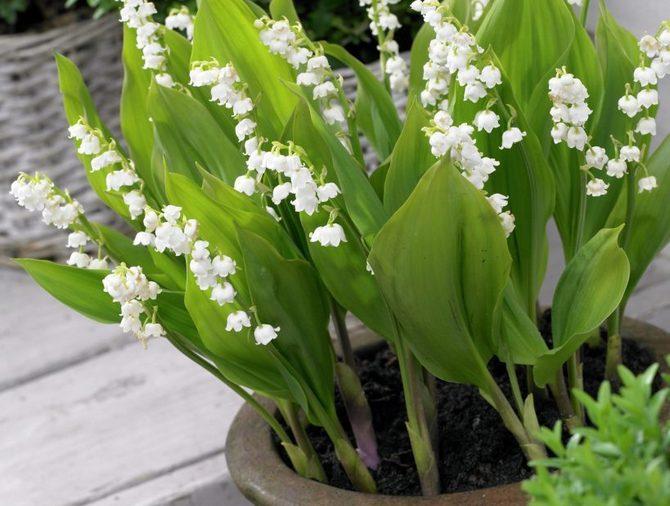 Растения нужно распределять так, чтобы они не теснились, но выглядели красивым букетом