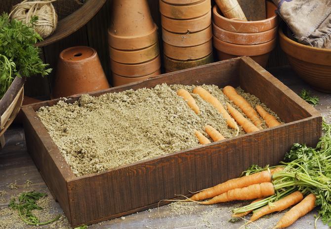 Как хранить морковь в песке
