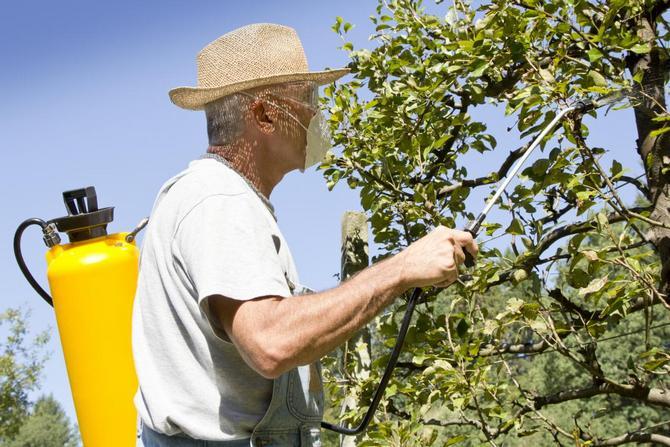 От начала цветения и до формирования завязи плодовые деревья один раз в неделю необходимо опрыскивать специальными биопрепаратами