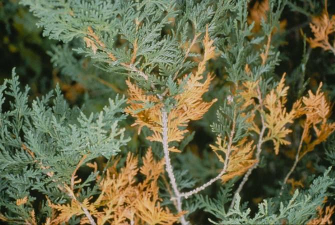 Если растение болеет, то причина может быть только в неправильном уходе