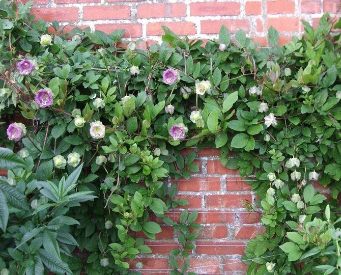 Подкормки и удобрение растения