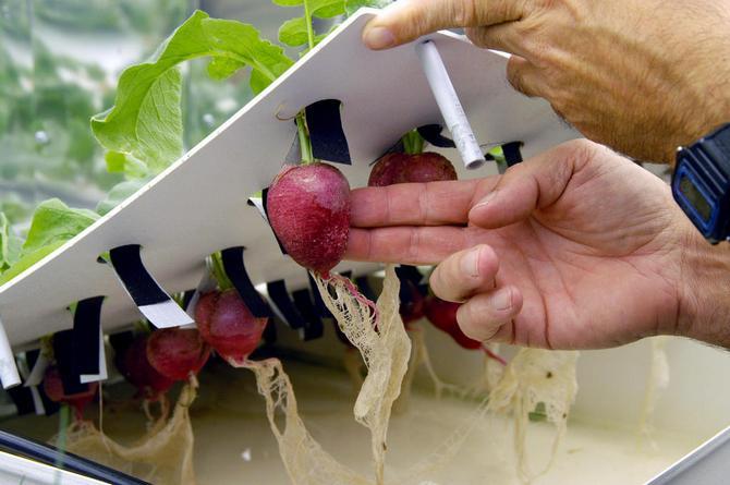 Гидропоника в домашних условиях. Выращивание растений с помощью гидропоники