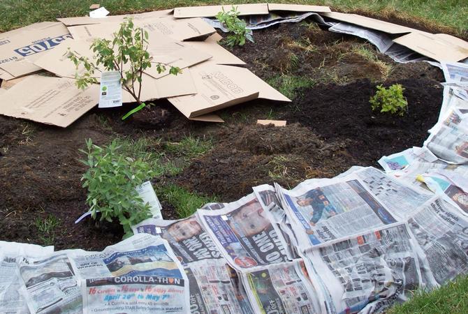 Прочитанные цветные и черно-белые газеты можно смело укладывать на грядки – они станут прекрасной мульчей и не дадут расти сорнякам.