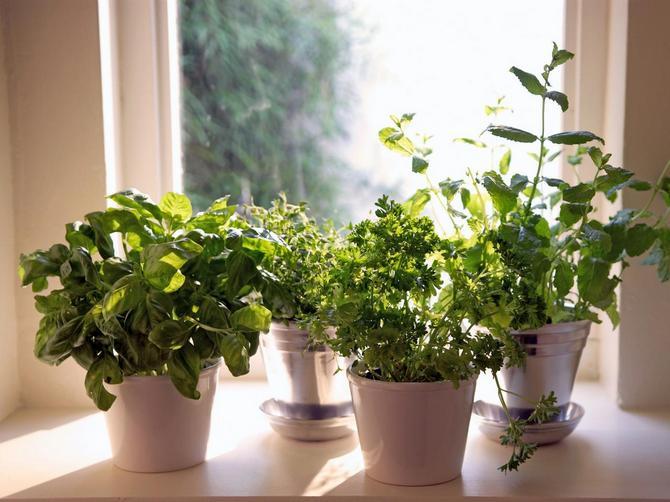 Индивидуальные условия выращивания каждой овощной культуры