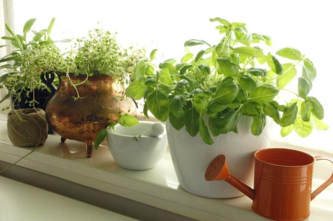 Основные правила ухода и выращивания овощей