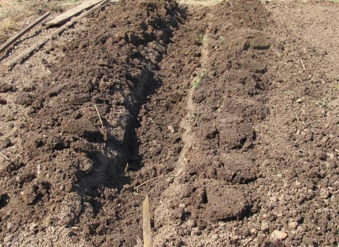 Подготовка траншей для посадки картофеля